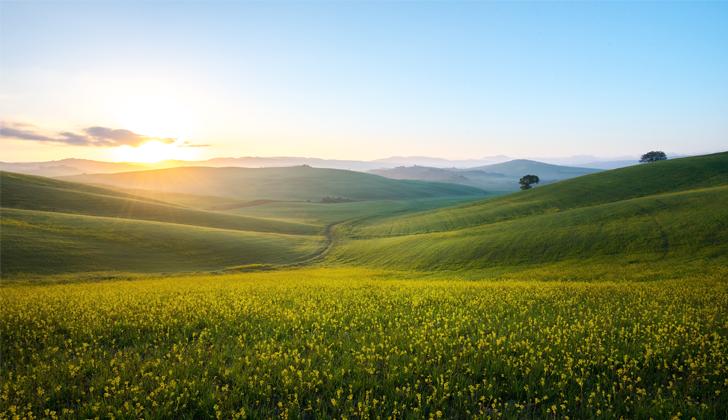Toscana in Sunset-wellspect